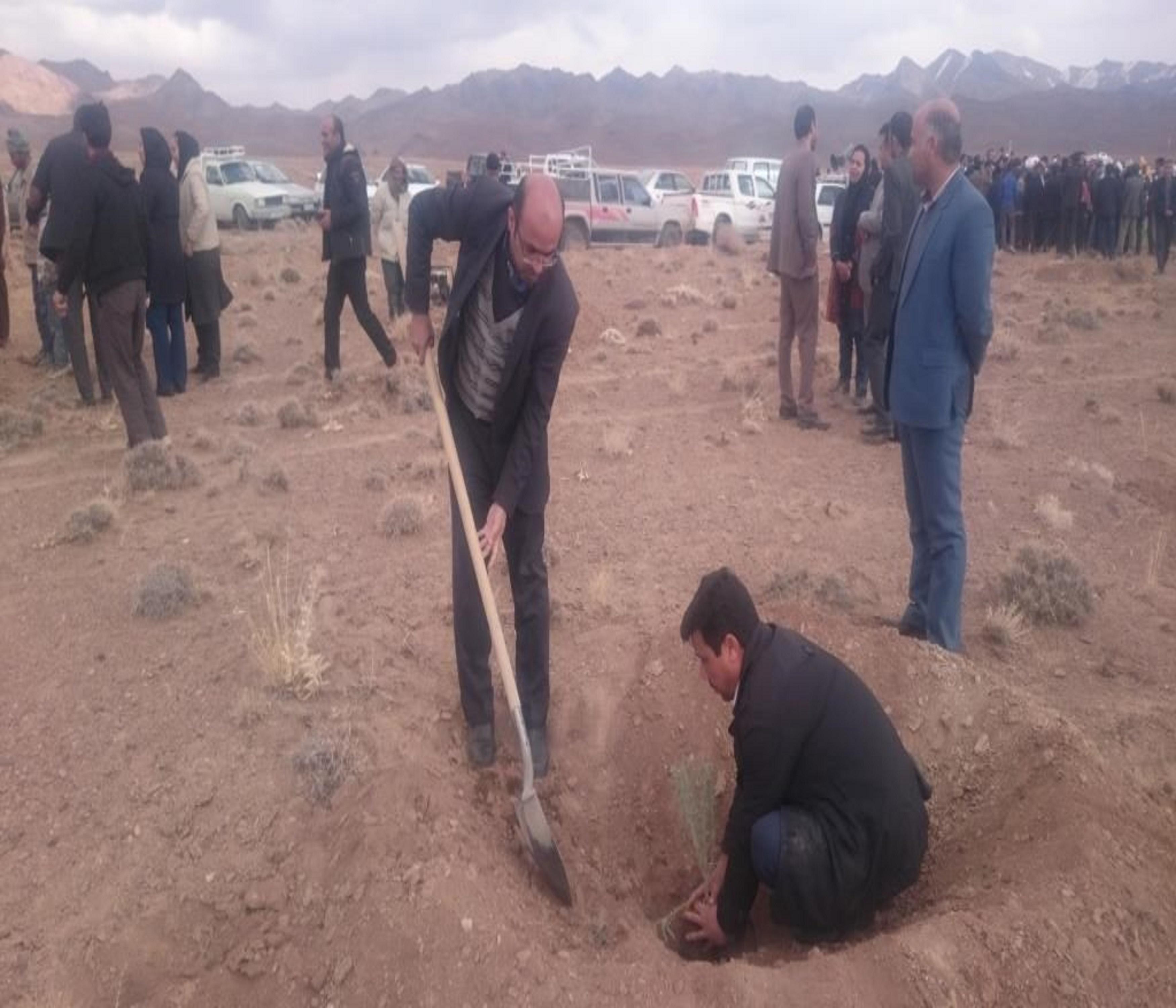 مشارکت کارکنان اداره صنعت، معدن و تجارت شهرستان سربیشه در پویش همگانی نهالکاری